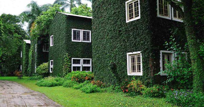 Case pi fresche se ricoperte di vegetazione for Case ricoperte di edera